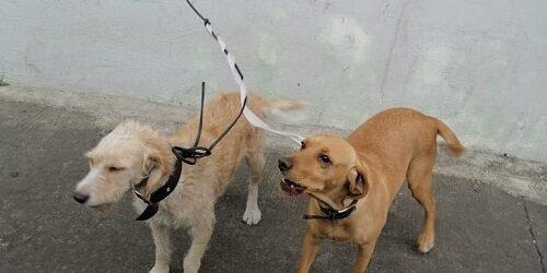 Interviene CBA situación de maltrato animal