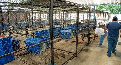 Protege CBA a más de 20 animales de compañía maltratados