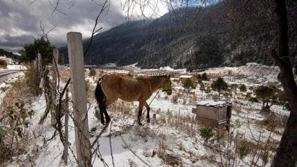 Nieve cubre el Norte de México; se mantiene clima gélido por paso de frente frío 24