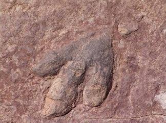 Hallan un titanosaurio de 140 millones de años, el más antiguo del mundo