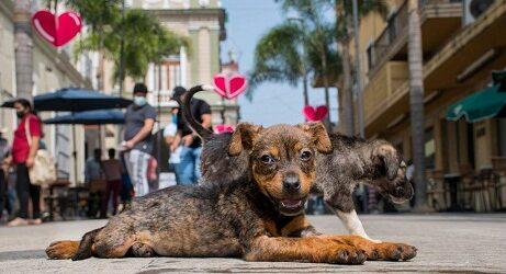 Adopta desde Casa del CBA Córdoba busca hogar para once cachorros caninos