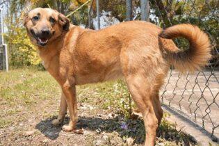 ¡ENAMÓRATE!…Ocho animales de compañía buscan nuevo hogar a través de CBA Córdoba