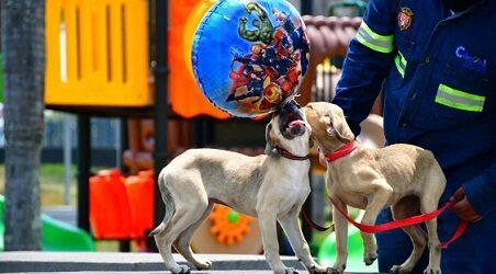 En Córdoba realizarán pasarela de adopción canina por Día del Niño