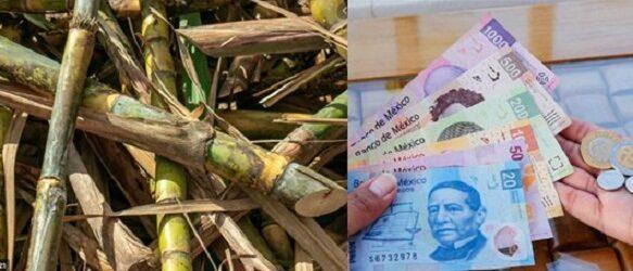 El Potrero liquidaría en 940 pesos aproximado la tonelada d caña: CNPR