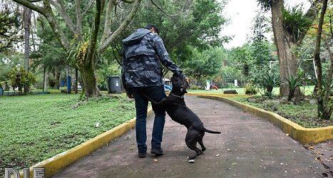 DIF Córdoba da a conocer  reglamento para ingreso de mascotas en parques