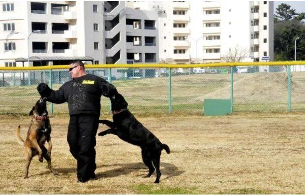 Emiratos detecta Covid-19 con perros; el método es eficaz e inmediato, dicen
