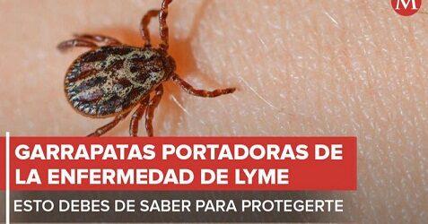 Garrapatas portadoras de la enfermedad de Lyme; esto debes de saber para protegerte