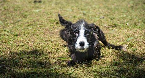 Once canes buscan nuevo hogar a través de campaña Adopta desde Casa en Córdoba