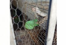 Rescata CBA Córdoba ocho animales de compañía en dos intervenciones