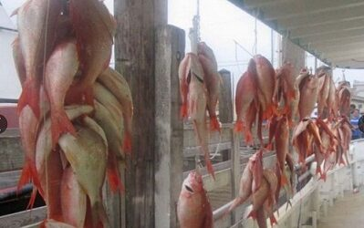 Se le viene la noche a la pesca mexicana, EU otorga certificación negativa