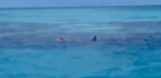 ESCENA FUERTE…Tiburones devoran cuerpo de un hombre; impidieron su rescate
