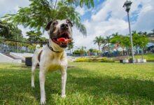 FESTIVAL PERRÓN…A Córdoba invita a Caminata de Adopción Canina, once lomitos suaves buscan hogar